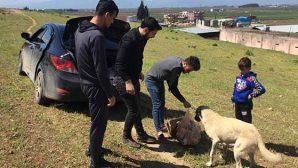 CHP'li Gençlerde Hayvan Sevgisi