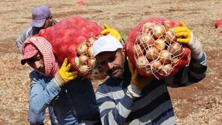 Hatay'daki mevsimlik işçiler