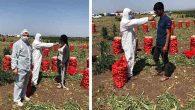 Tarım Müdürlüğü'nden küresel salgın tedbirleri