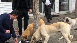 Vali Doğan: Sokak Hayvanlarını Unutmayın