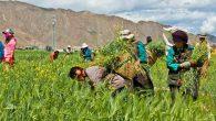 Bir Alkışı da Emektar Çiftçimiz Hak Ediyor