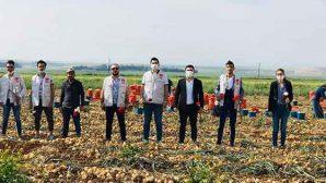 Reyhanlı'da CHP'li Gençler Tarlada