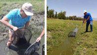 Mahsur Kalan Balıklar Su Kaynaklarına Kavuştu