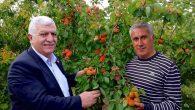 Tokdemir: Bahçe Tarımımız Dünyaya Tanıtılmalı