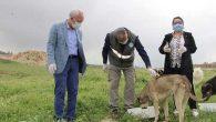 Tosyalı: Hayvanlara Sahip Çıkmak İnsani Görevdir