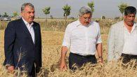 Bu Yılki Yüksek Verim, Çiftçinin Yüzünü Güldürüyor