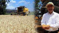 Buğdayın  Ekim Alanı da  Rekoltesi de Arttı