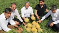 Kırıkhan'da kavun hasadı başladı…