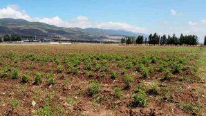 Hatay BŞB sebze ekimine başladı