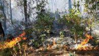 Bahçe yangını