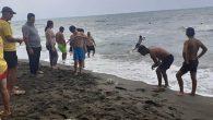 Hatay Sahillerinde  Denizanası Korku ve Telaşı