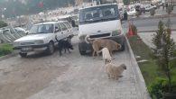 Sokaklar, Köpeklerin Egemenliğinde!