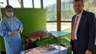 Samandağ Deniz sahilinde köpek saldırısı CARETTA Kaplumbağalara