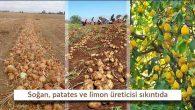 Hatay'dan Adana'ya Soğan tarlada kaldı