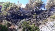 Çubukçu'da orman yangını