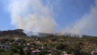 Antakya'da dört farklı noktada yangın
