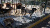 Köpek ölümleri ve hayvanlara iyi bakılmadığı gerekçesiyle…