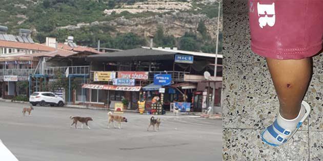 Sokak köpekleri tehlikesi