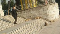 Sokaktaki Köpeği Almak BŞB Görevi Değil
