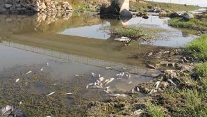 Balık Ölümleri Yaşanan Derede İnceleme