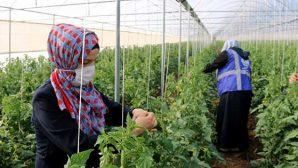 Savaş Mağdurları İçin Tarımsal Destek Projesi