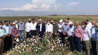 CHP'li Vekil Tarlada