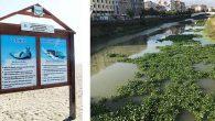 Son 10 yıldır Asi'deler… Ekosistemi bozuyorlar…