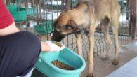 Zehirlenen Hayvanlara HBB'den Müdahale