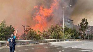"""HDP, """"Kim olursa olsun orman yangınını kınadı"""""""