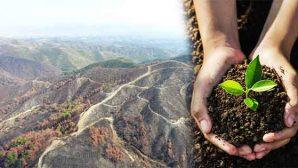 Hatay ormanları için umut ol gelecek bahara…