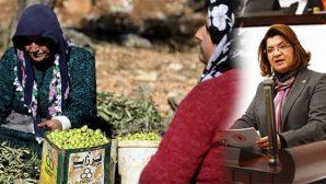 """Afrin Zeytinyağı tartışması… """"Yerli üretici borç batağında"""""""