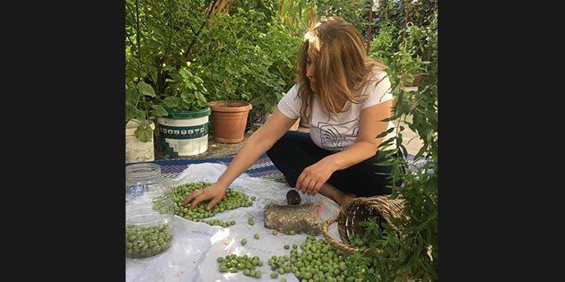 Gastronomi kentinde zeytinin hasat zamanı