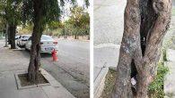 Uzaktan bakınca, ağaç… Yakından ise çöp kutusu!