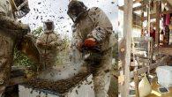 Hatay'ın arıcılık sektörü de İpek böceği yetiştiriciliği de