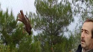 Kuş avcıları tuzağı