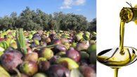 Afrin'den gelen 38 bin ton zeytinyağı…