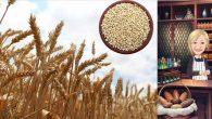 """""""GDO'lu Buğday Yoktur. Buğdayın Genetiği İle Oynanmamıştır"""""""