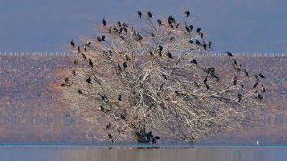 Amik-Afrin Barajı ile Kırıkhan Ovasında: