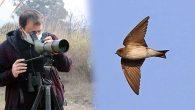 Hindistan Menşeli Kuş Hatay'da Görüntülendi