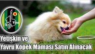 Yetişkin ve Yavru Köpek Maması Satın Alınacak