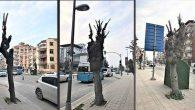 Eldeki Budamayla… Ağaçları güçlendiriyor muyuz?