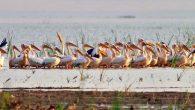 ATSO; Reyhanlı Barajı'nda av yasağı istedi