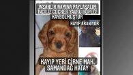 Kayıp köpeği bulana  1000 TL Ödül