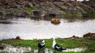 Volkanik Göl Göçmen Kuşların Gözdesi