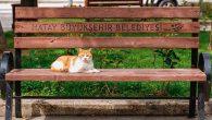 Kediler, belediyeleri seviyor…