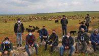 Çobanlık İçin Sertifika