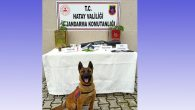 Jandarma narkotik operasyonları
