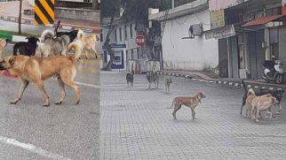 20 Köpek, İlçemize  Bilinçsizce Bırakılıp  Kaderine Terkedildi!