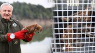 """Yabani Hayvanlar, Tedavi Edilip """"Özgürlüğe"""" Salınıyor"""