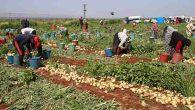 Tarım işçilerinin ramazanda zorlu ekmek mücadelesi